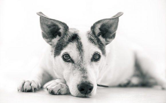 Cheap Dog Houses 2019 - Post Thumbnail
